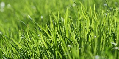 Repairing Lawn - Gardening Blog
